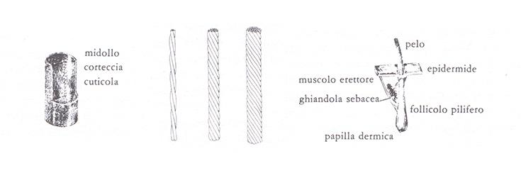Abc-SerigrafiaCapelliStruttura